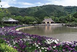 日本庭園 南楽園