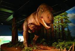 新潟県立自然科学博物館