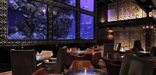 Aqua Dining Bar LUXIS(アクアダイニングラグシス)
